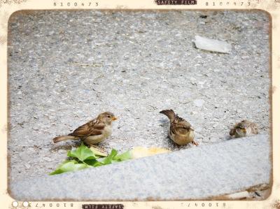 Three Little Birds Vintage