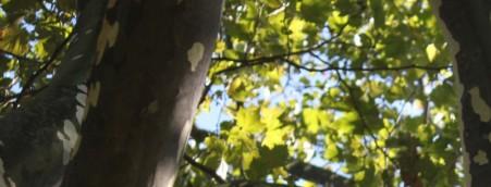 cropped-cropped-img_60552.jpg