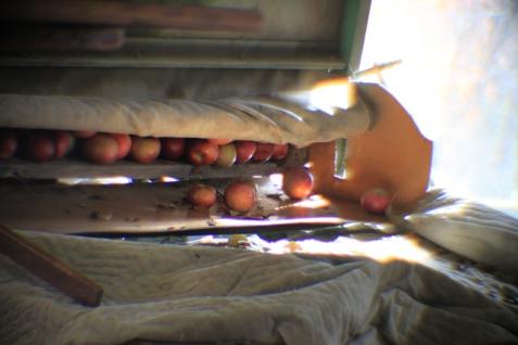 Old apple sorter